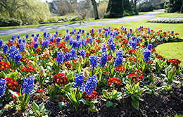 commercial flower bed maintenance