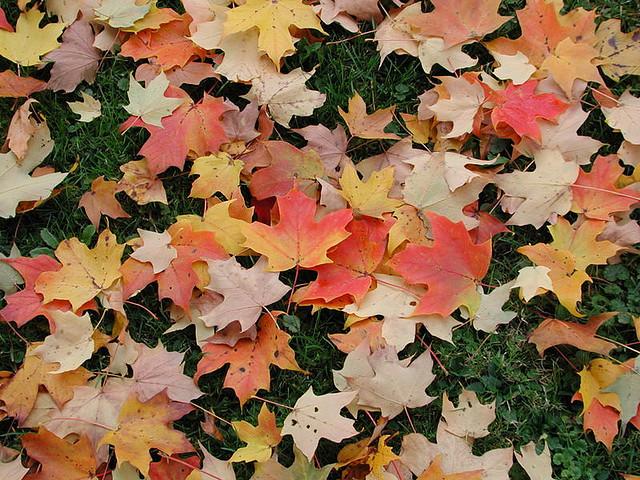 fall leaves cleanup in wayne nj