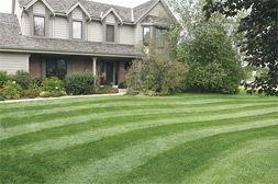 Lawn Maintenance Service in Wayne, NJ