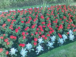 season flower installation